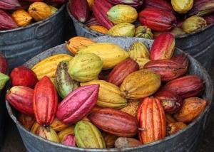 Cacao pods_Icyshard