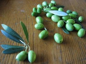 Olives_fresh_Frontriver