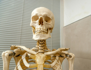 Skeleton_Diyanski