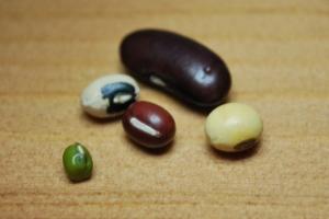 Beans_Yau Chan Ho