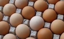 Eggs_Pletro Izzo