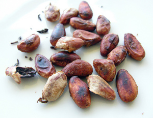 Cacao beans_roasted_Mr P de Panama