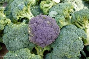 Broccoli_Brian Luster
