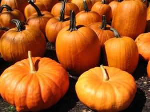 Pumpkin_Samantha Durfee
