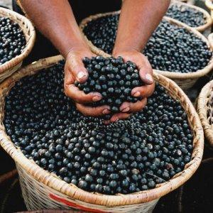 Acai Berries