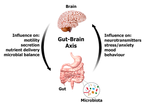 GBA - The Gut Brain Axis. Your Ally for Better Health