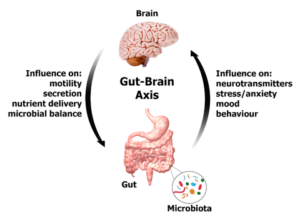 GBA 300x218 - The Gut Brain Axis. Your Ally for Better Health