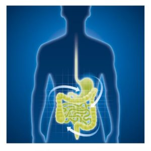 Gut schematic 300x300 - Gut Health. Is It A legitimate Health Goal?