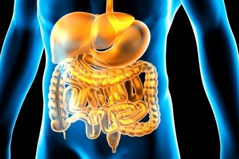 Gut - Gut Health. Is It A legitimate Health Goal?