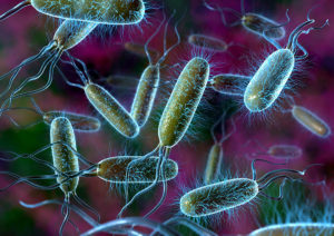 Bacteria 2 300x212 - What Is SIBO? Is It Giving You Digestive Woes?