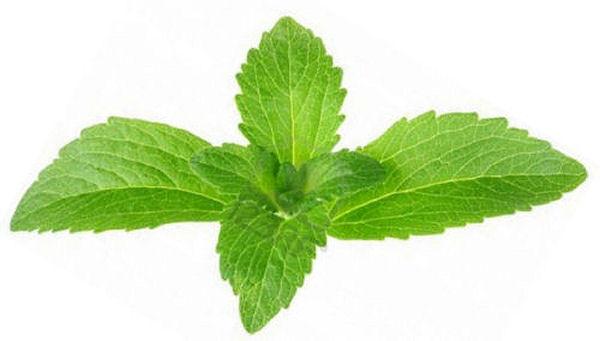 Fresh stevia leaves - by Doug Cook RD