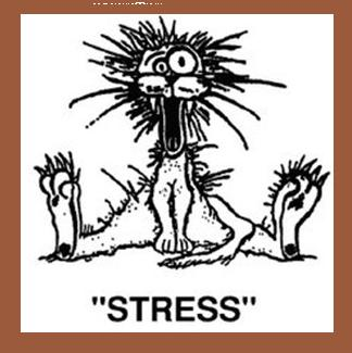 Stressed being
