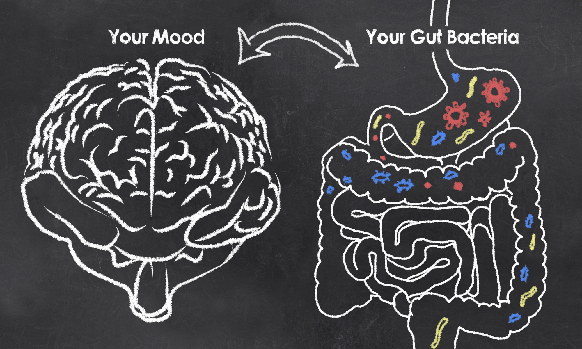 Connection between the gut brain and gut bacteria