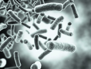 Bacteria 300x228 - Can Depression Be Helped With Probiotics?