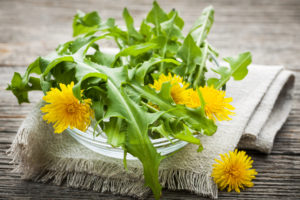 Dandelion flowers and prebiotic greens in bowl