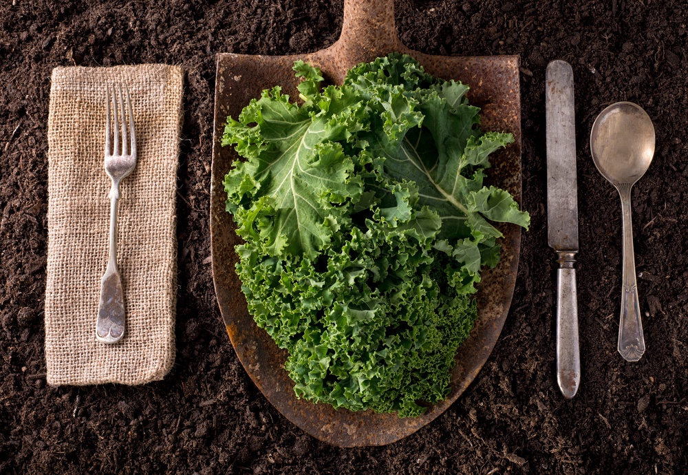 Kale leaves on a shovel on fresh soil
