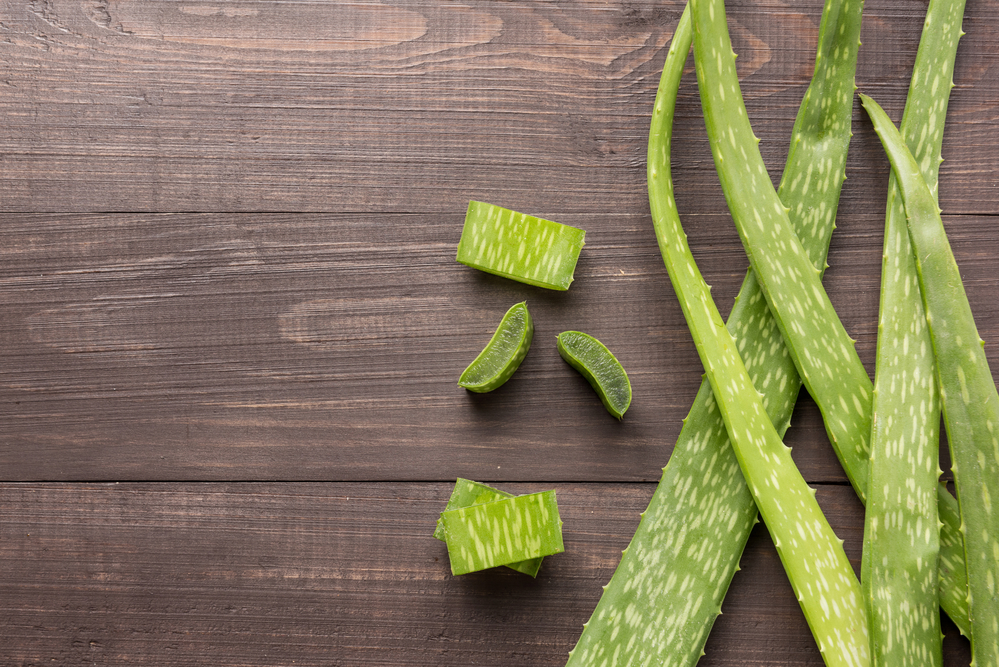 Aloe Vera - Can Thrive Patch Help You Lose Weight?