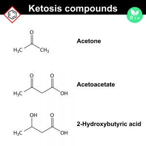 Ketone bodies - by Doug Cook RD