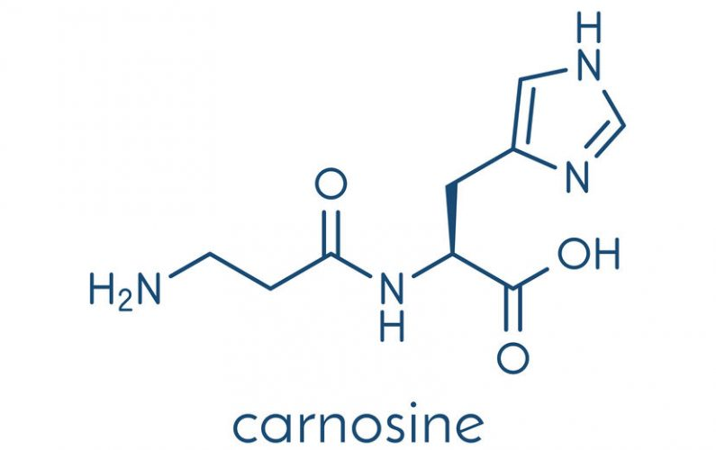 Carnosine (L-carnosine) food supplement molecule.