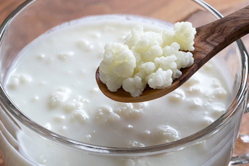 Kefir grains on a wooden spoon above a jar of milk kefir